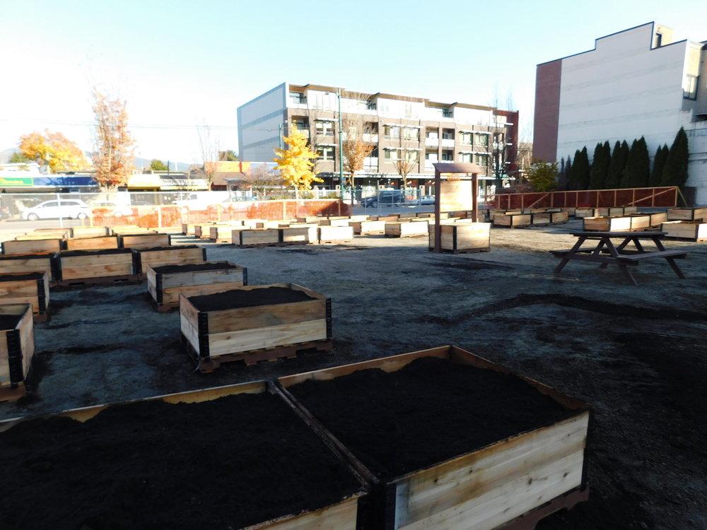 Broadway_Alma_Vancouver_Community_Garden_Builders-0003.JPG