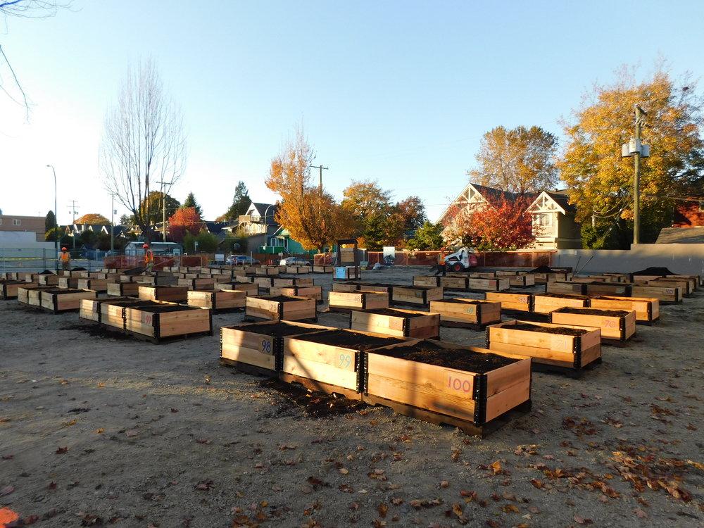 4th_Macdonald_Vancouver_Community_Garden_Builders-0008.JPG