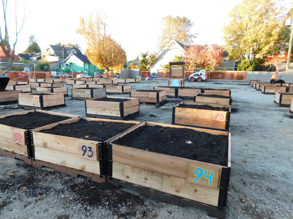 4th_Macdonald_Vancouver_Community_Garden_Builders-0010.JPG
