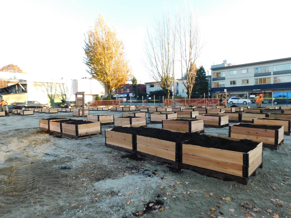 4th_Macdonald_Vancouver_Community_Garden_Builders-0013.JPG