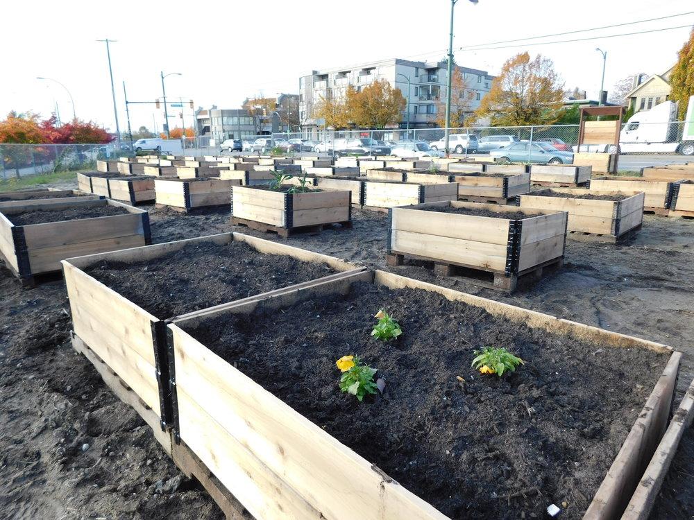 Victoria_Broadway_Vancouver_Community_Garden_Builders-0009.JPG
