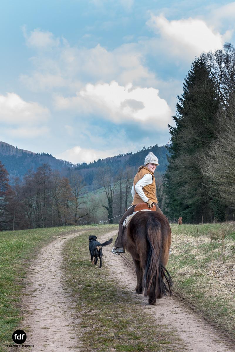 Der Ausritt-Schwarzwald-Isländer-Pferd-Portrait-1.jpg