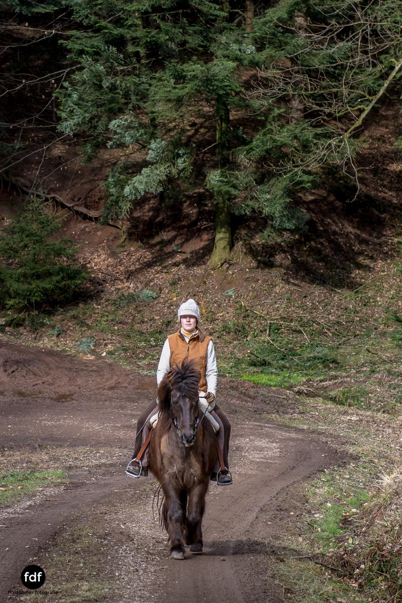 Der Ausritt-Schwarzwald-Isländer-Pferd-Portrait-2.jpg