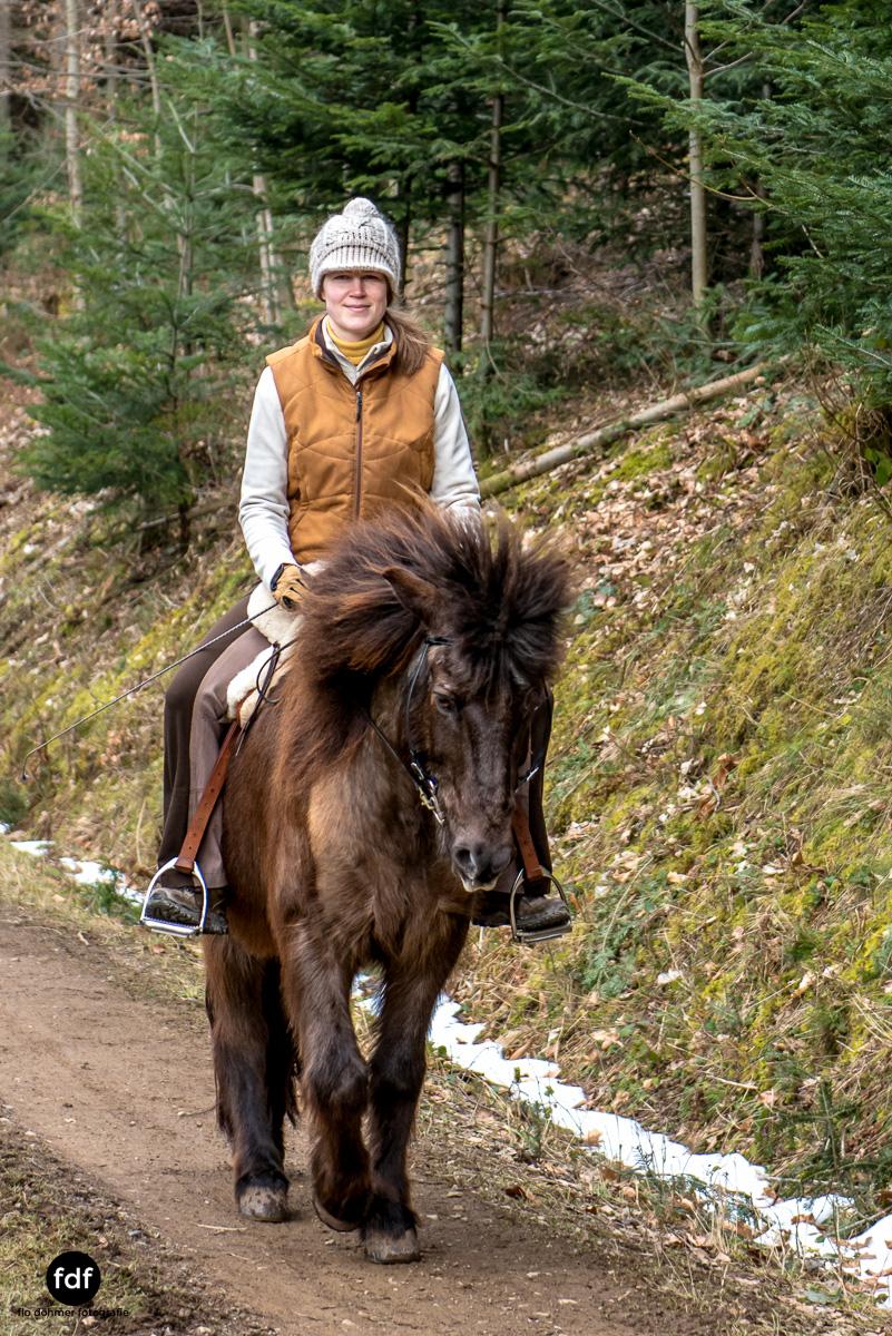 Der Ausritt-Schwarzwald-Isländer-Pferd-Portrait-3.jpg