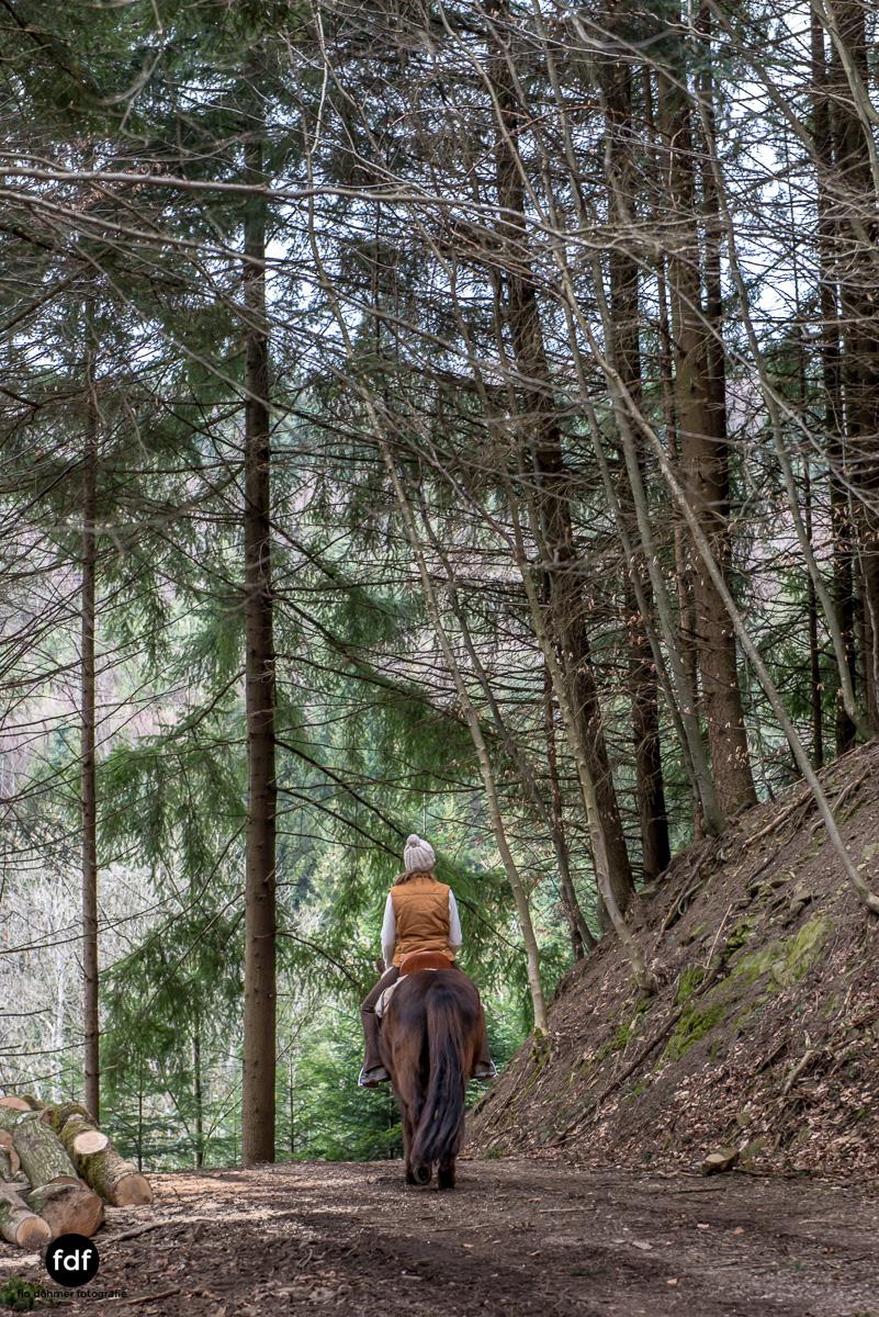 Der Ausritt-Schwarzwald-Isländer-Pferd-Portrait-5.jpg