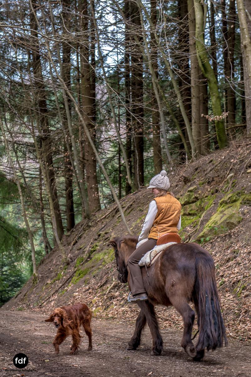 Der Ausritt-Schwarzwald-Isländer-Pferd-Portrait-4.jpg