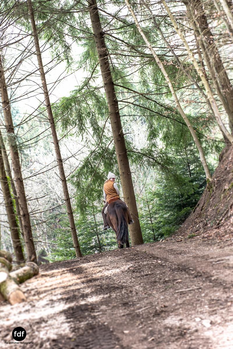 Der Ausritt-Schwarzwald-Isländer-Pferd-Portrait-6.jpg