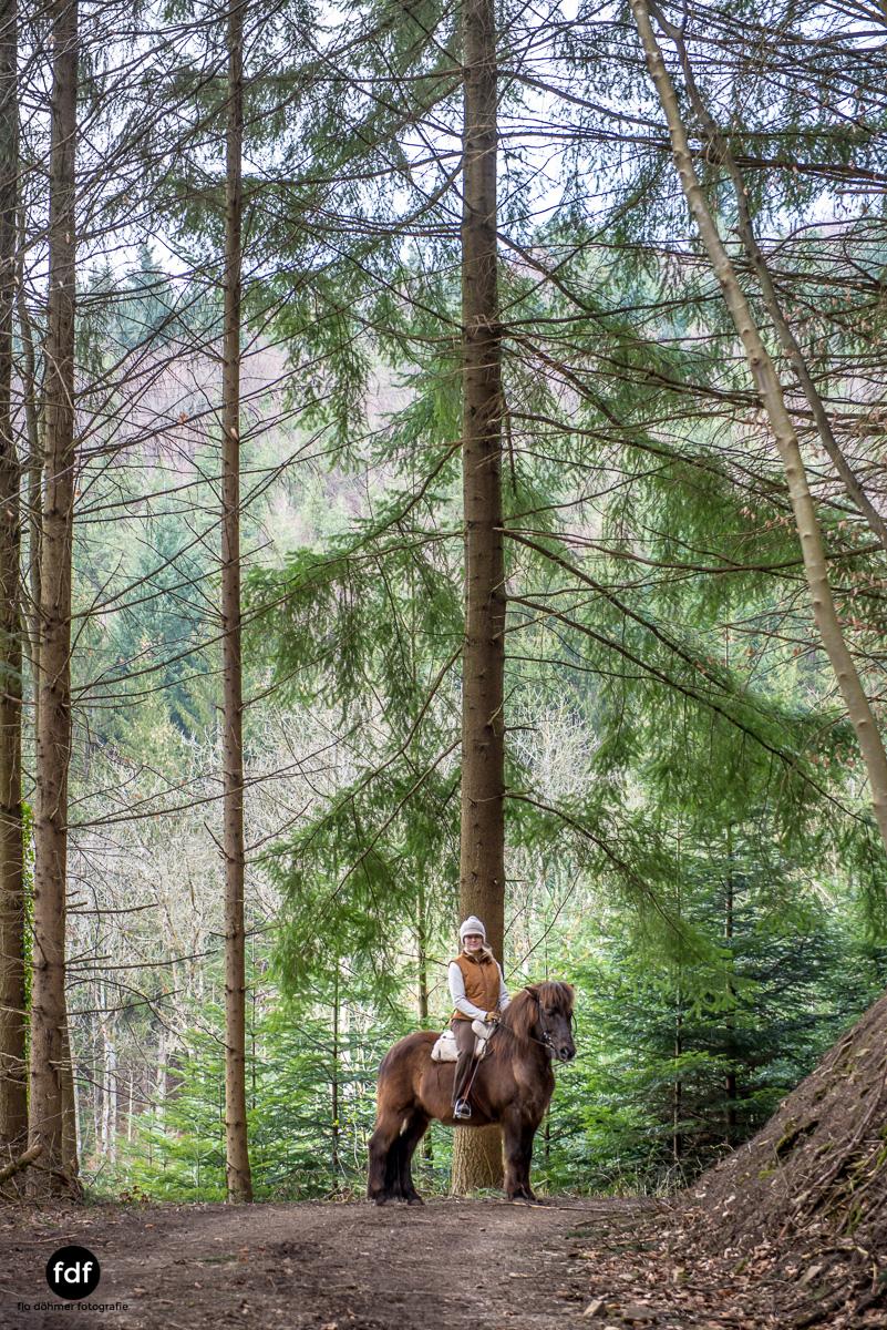 Der Ausritt-Schwarzwald-Isländer-Pferd-Portrait-7.jpg