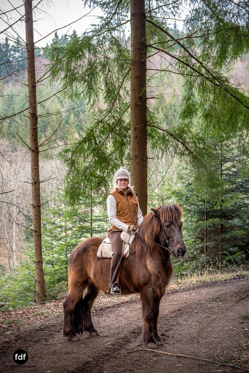Der Ausritt-Schwarzwald-Isländer-Pferd-Portrait-8.jpg
