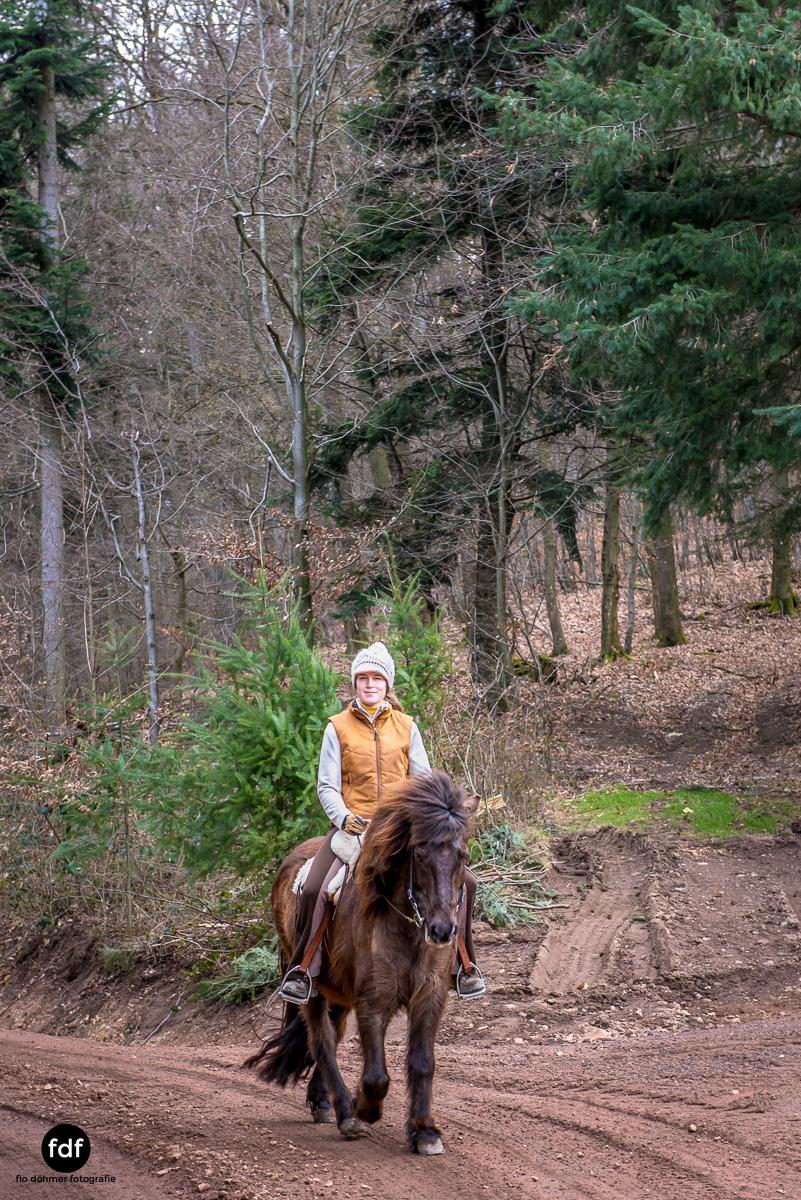 Der Ausritt-Schwarzwald-Isländer-Pferd-Portrait-10.jpg