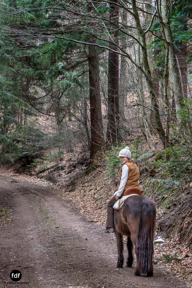 Der Ausritt-Schwarzwald-Isländer-Pferd-Portrait-9.jpg