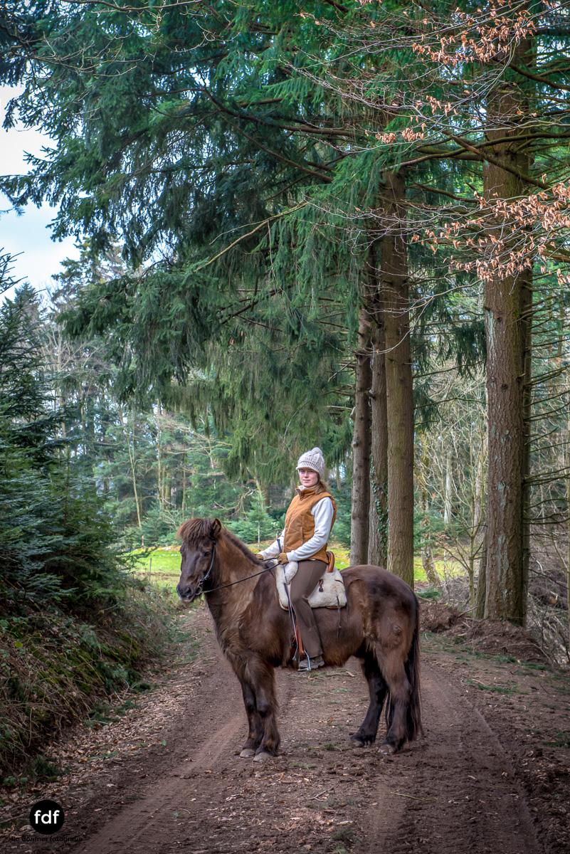 Der Ausritt-Schwarzwald-Isländer-Pferd-Portrait-11.jpg