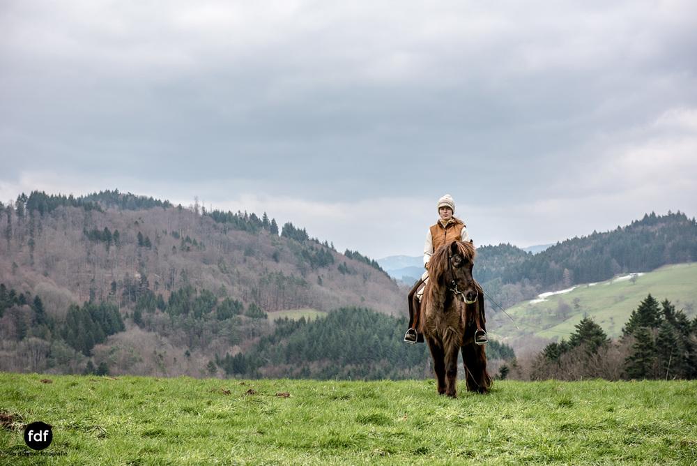 Der Ausritt-Schwarzwald-Isländer-Pferd-Portrait-12.jpg