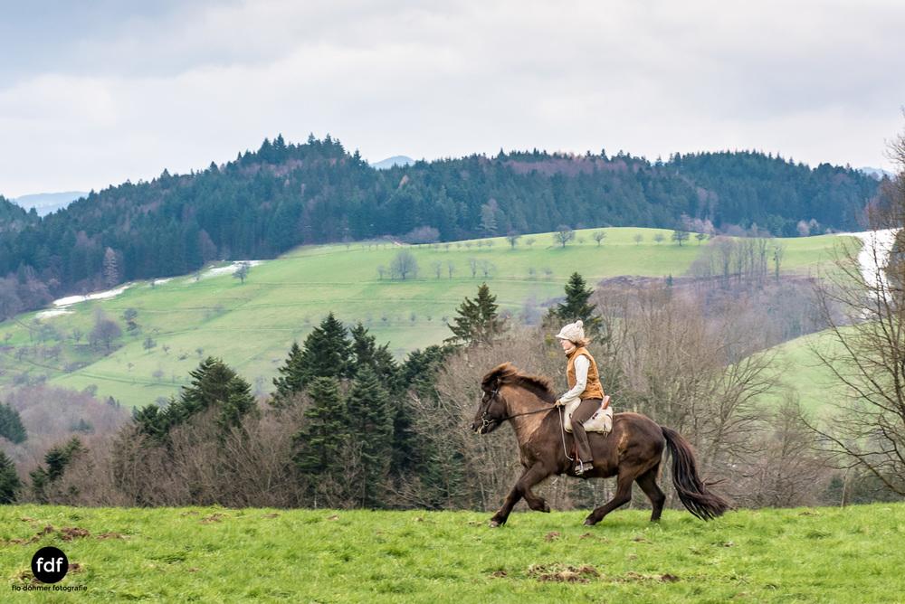 Der Ausritt-Schwarzwald-Isländer-Pferd-Portrait-15.jpg