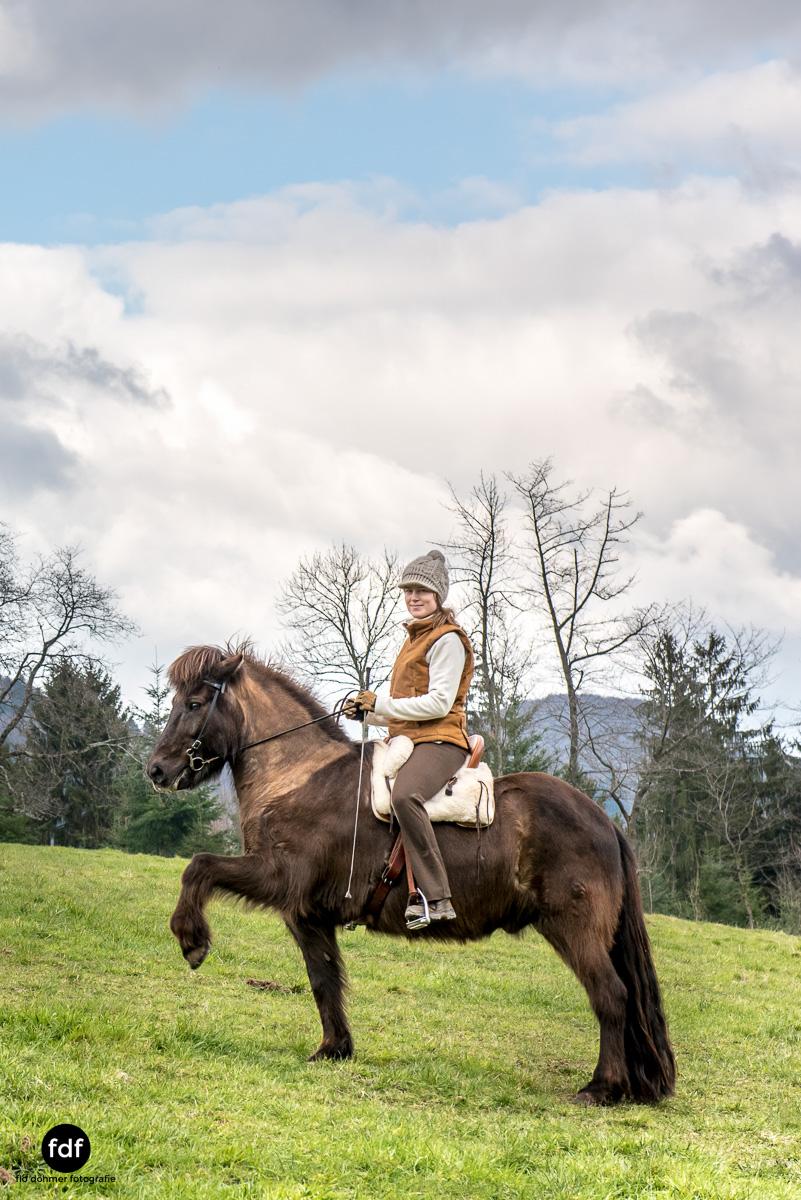 Der Ausritt-Schwarzwald-Isländer-Pferd-Portrait-16.jpg