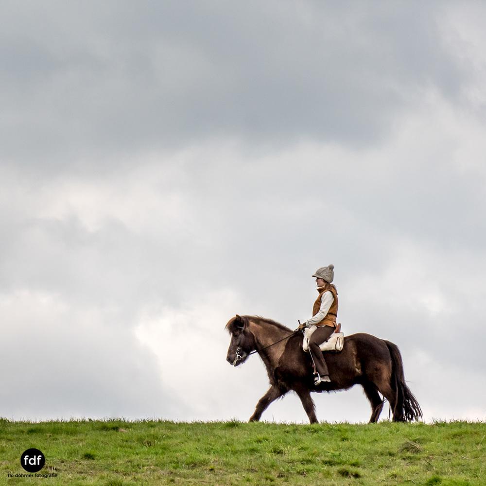 Der Ausritt-Schwarzwald-Isländer-Pferd-Portrait-18.jpg