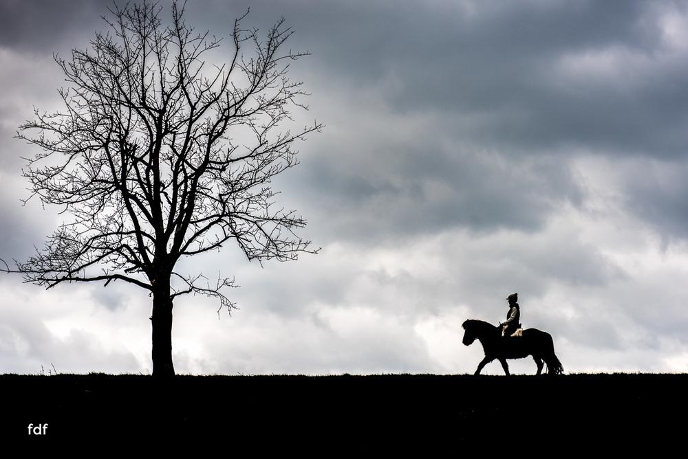 Der Ausritt-Schwarzwald-Isländer-Pferd-Portrait-19.jpg