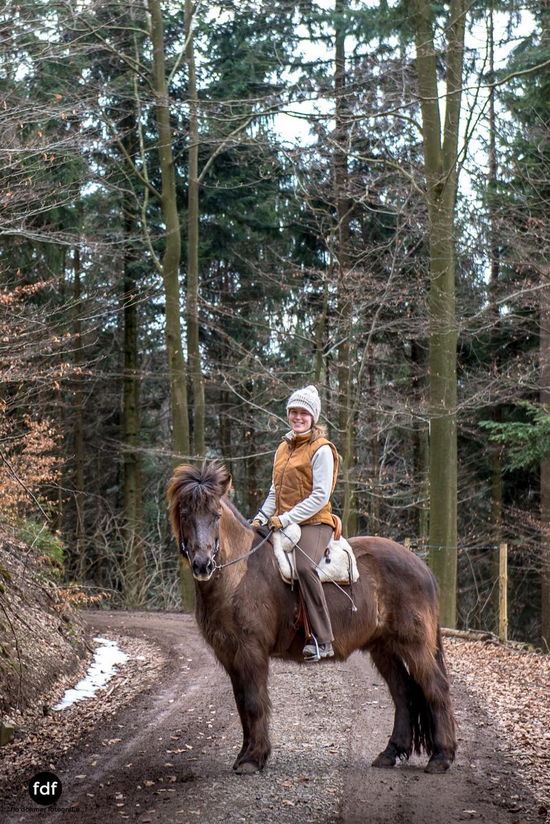 Der Ausritt-Schwarzwald-Isländer-Pferd-Portrait-22.jpg