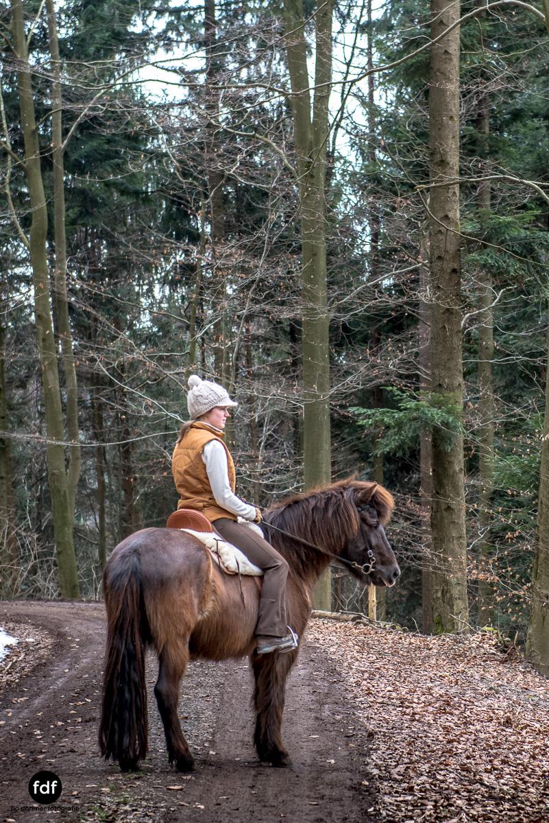 Der Ausritt-Schwarzwald-Isländer-Pferd-Portrait-21.jpg