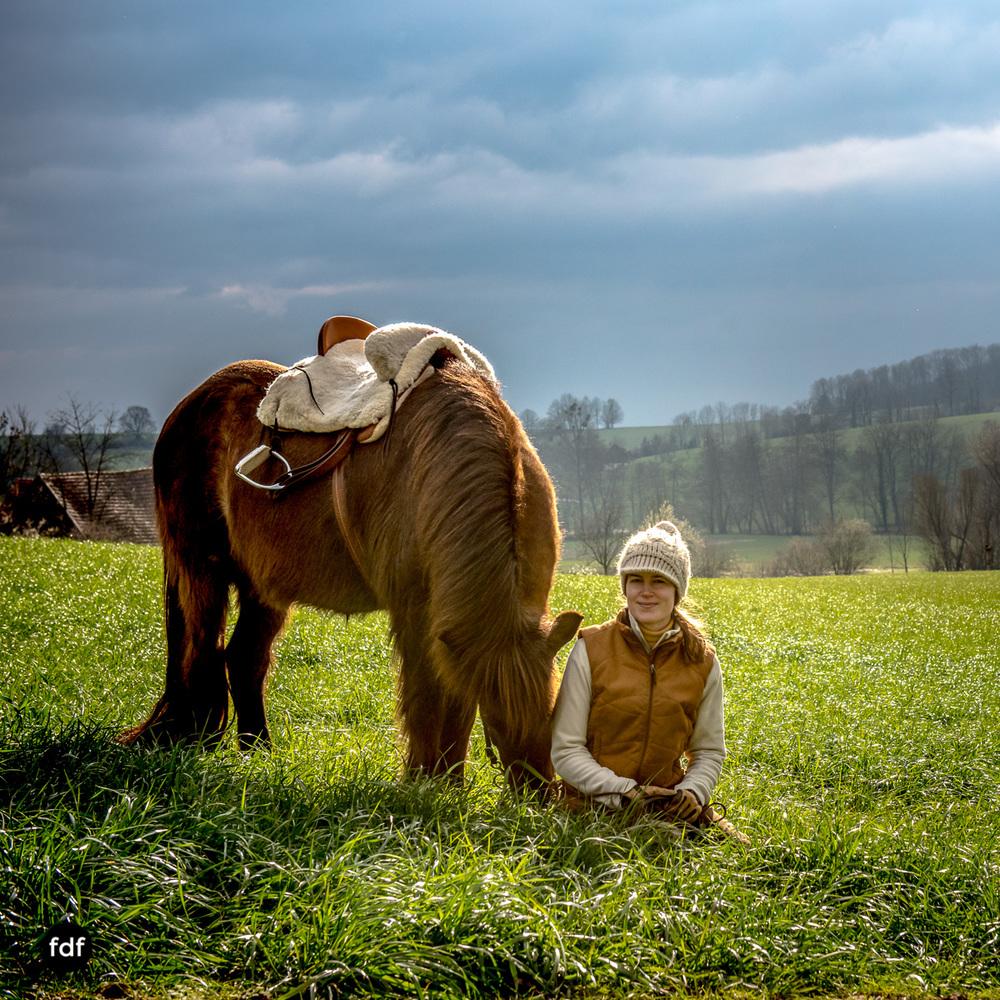 Der Ausritt-Schwarzwald-Isländer-Pferd-Portrait-23.jpg