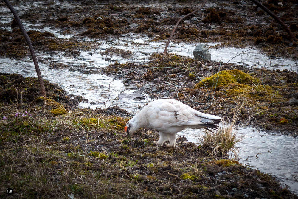 Pyramiden-Norwegen-Spitzbergen-Svalbard-Lost Place--382.JPG