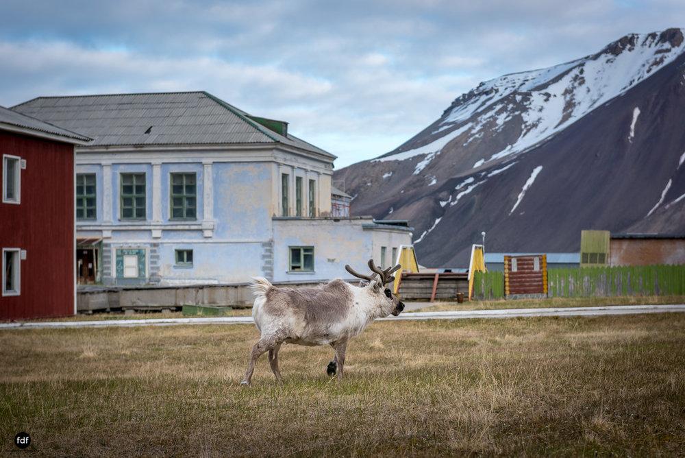 Pyramiden-Norwegen-Spitzbergen-Svalbard-Lost Place--499.JPG