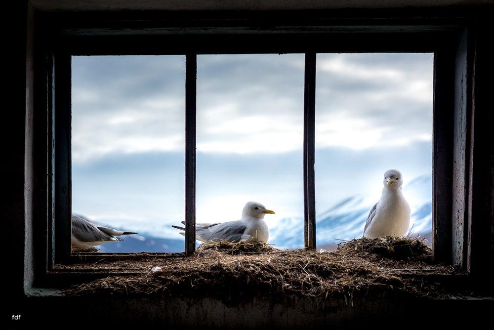 Pyramiden-Norwegen-Spitzbergen-Svalbard-Lost Place--376.JPG