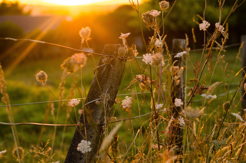 sunset field 365 Project 2015 {Auckland-Hamilton lifestyle photographer}