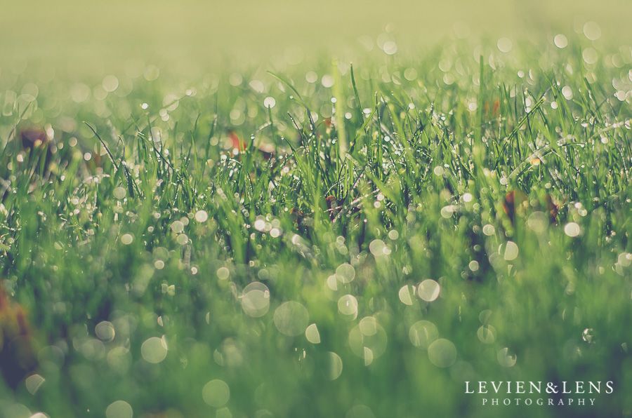 water drop grass 365 Project 2015 {Auckland-Hamilton lifestyle photographer}