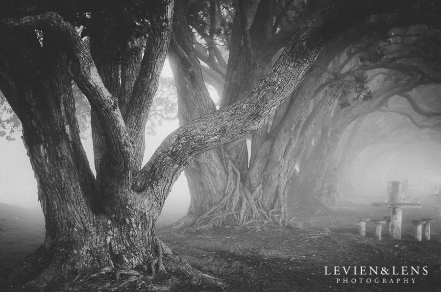 fog forest 365 Project 2015 {Auckland-Hamilton lifestyle photographer}
