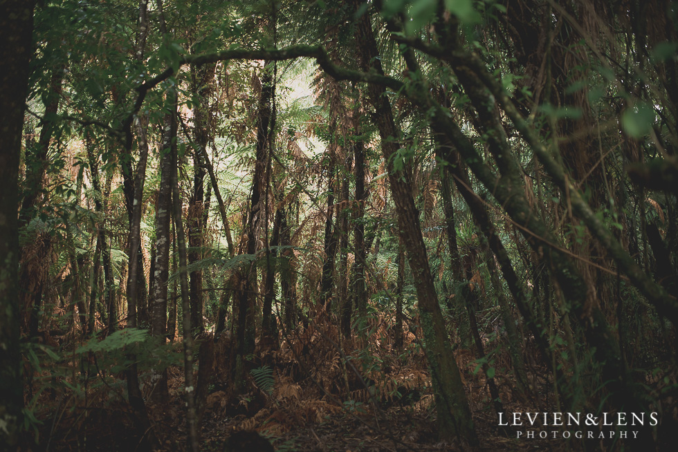Pirongia bush walk - personal moments {Waikato lifestyle wedding photographer}