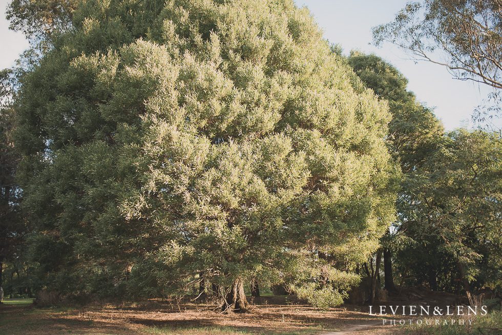 trees Light and lifestyle {New Zealand wedding-engagement photographer}