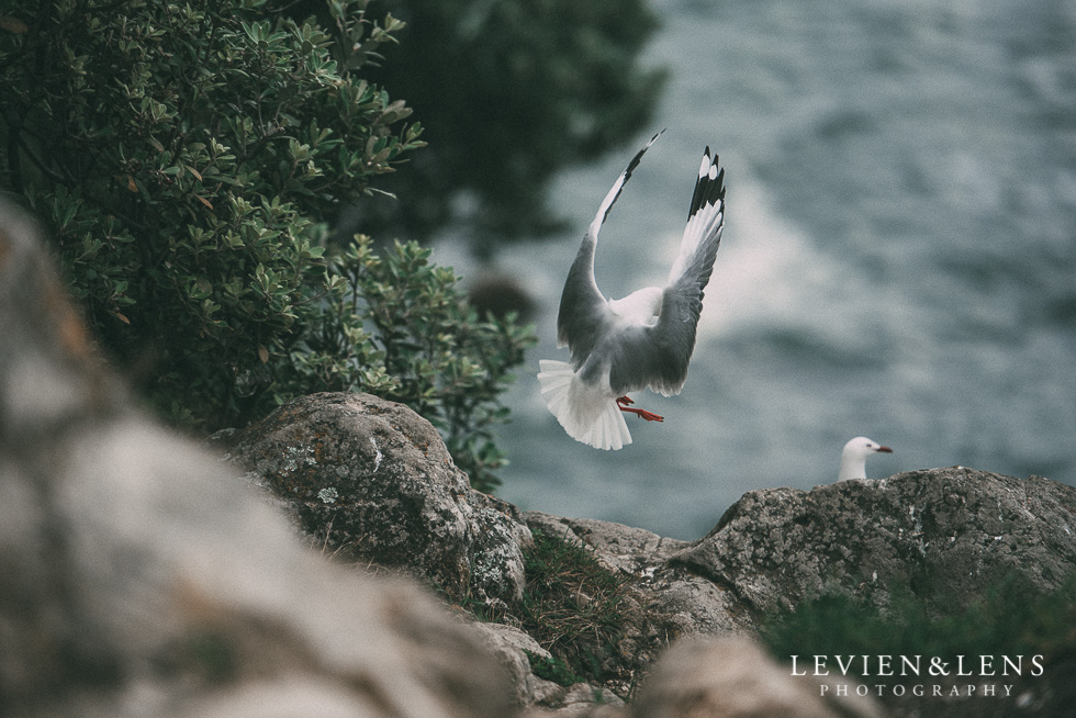 bird and ocean - One little day in Tauranga - personal everyday moments {Hamilton NZ wedding photographer} 365 Project