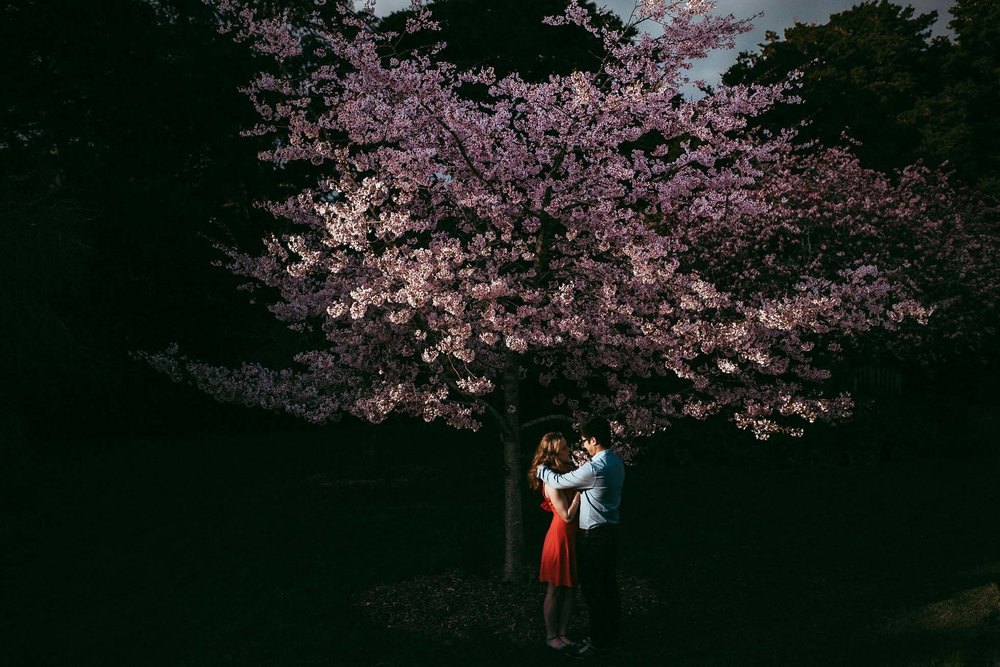 Auckland Botanic Gardens Engagement Session - Spring Cherry Blossom {Waikato wedding photographer}