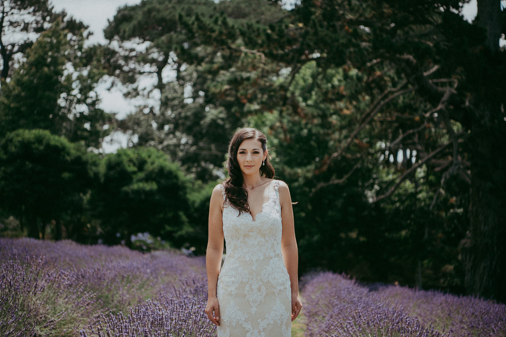 lavender farm - Auckland wedding photographer