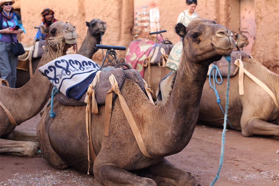Morocco67.jpg