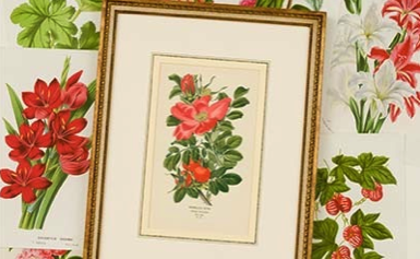 botanical-prints-jpocker-new-york.png