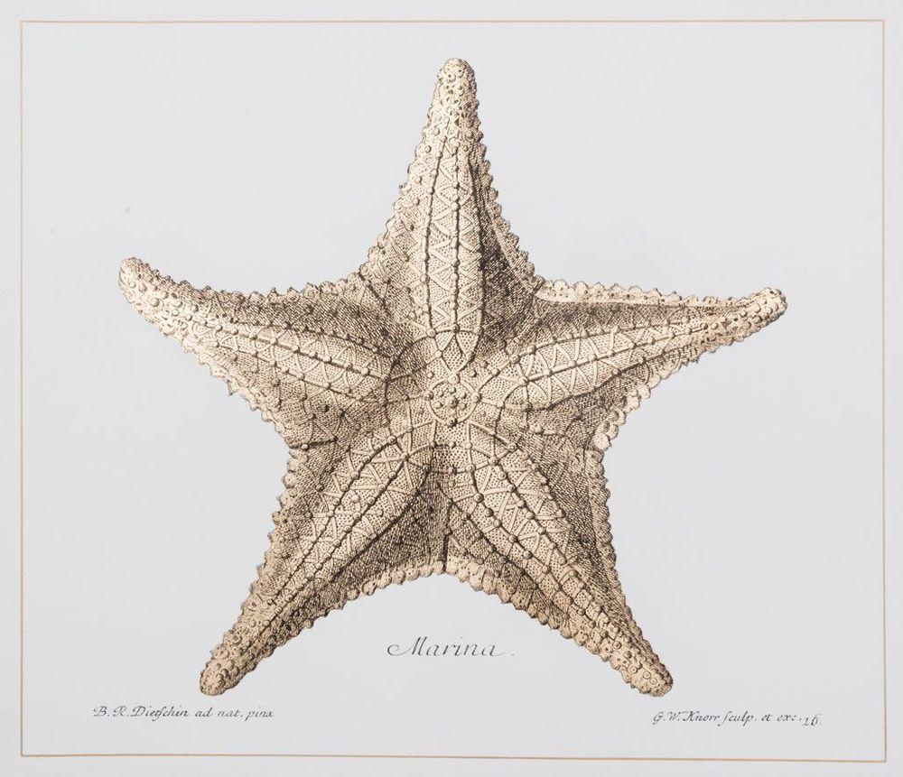Starfish (A)