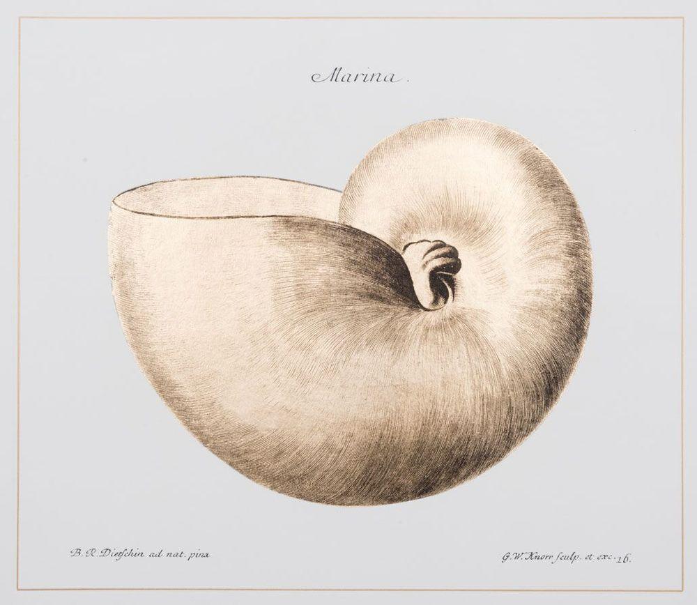 Shell (C)