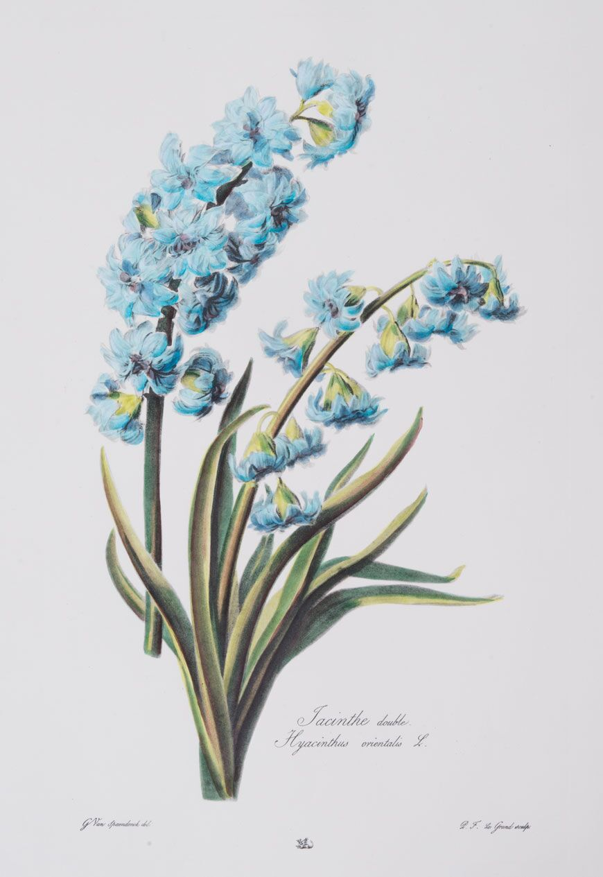 Large Blue Botanical Series (C)