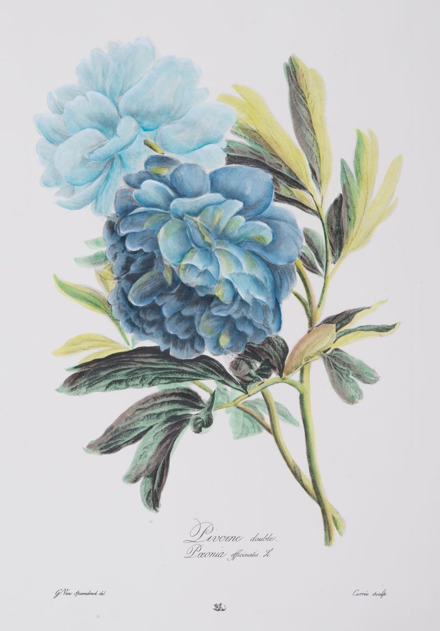 Large Blue Botanical Series (D)