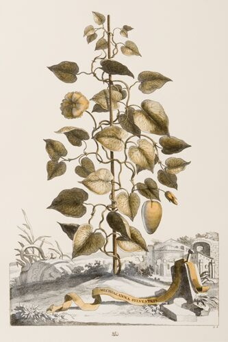 Ferreri Botanical Seriesv (B)