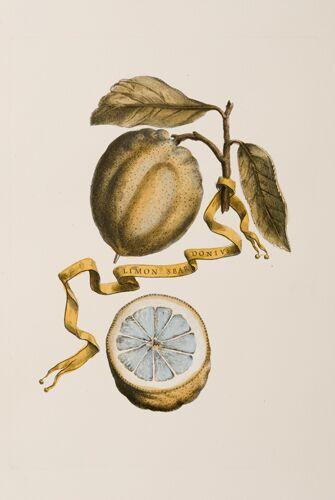 Italian Citrons (A)