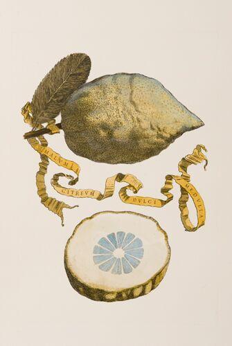Italian Citrons (C)