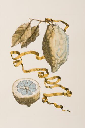 Italian Citrons (B)