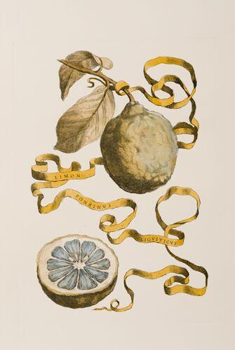 Italian Citrons (D)