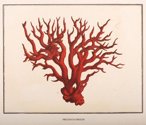 Precious Corales, 3