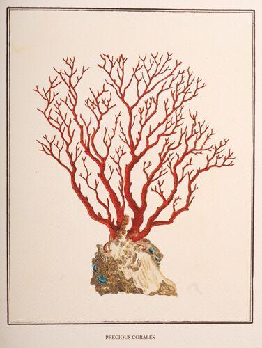 Precious Corales, 2