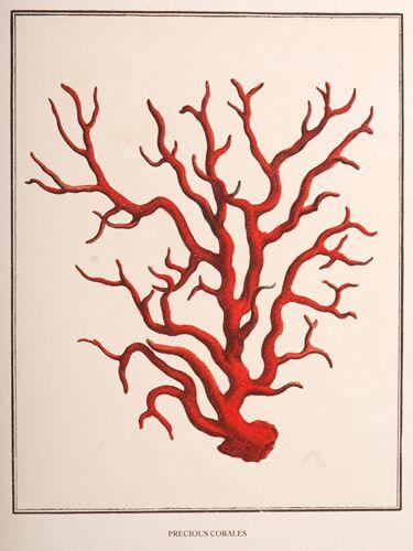 Precious Corales, 4