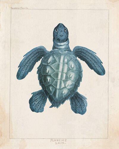 Planche LX1X, Sea Turtle